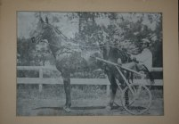 1900s Dan Patch Horse