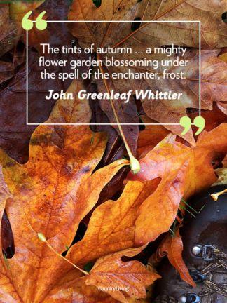 john greenleaf whittier fall tisha martin author editor historical fiction romance