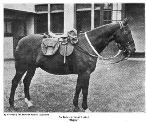 Ideal-Cavalry-Horse